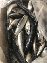 Load image into Gallery viewer, Mackerel Whole Prey Fish