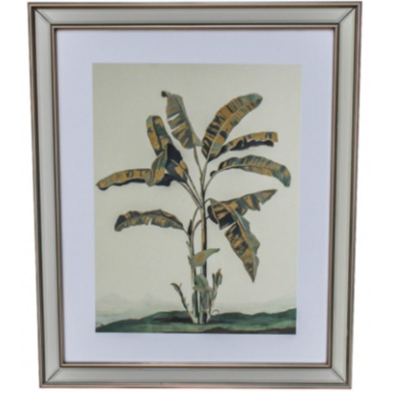 Framed Print Palms 4