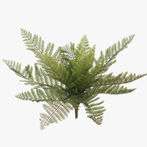Leather Fern Bush Green 33 cm