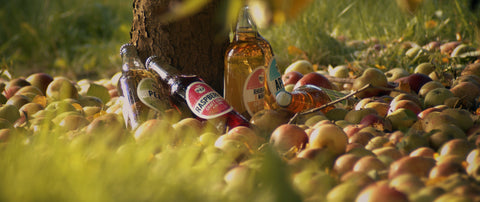 Photo of Pulp Cider co bottles and apples at the base of a tree.