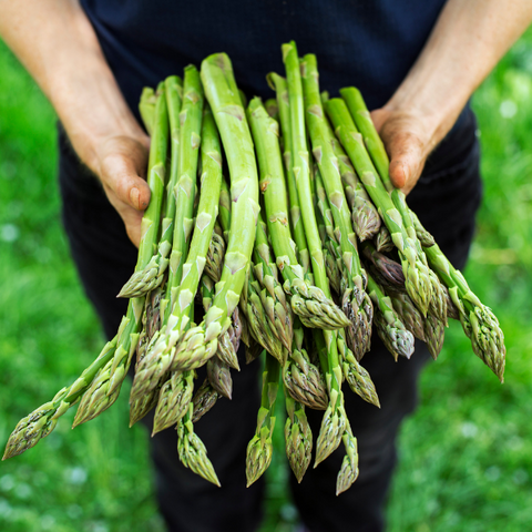 Photo of someone holding a bunch of asparagus in a field.