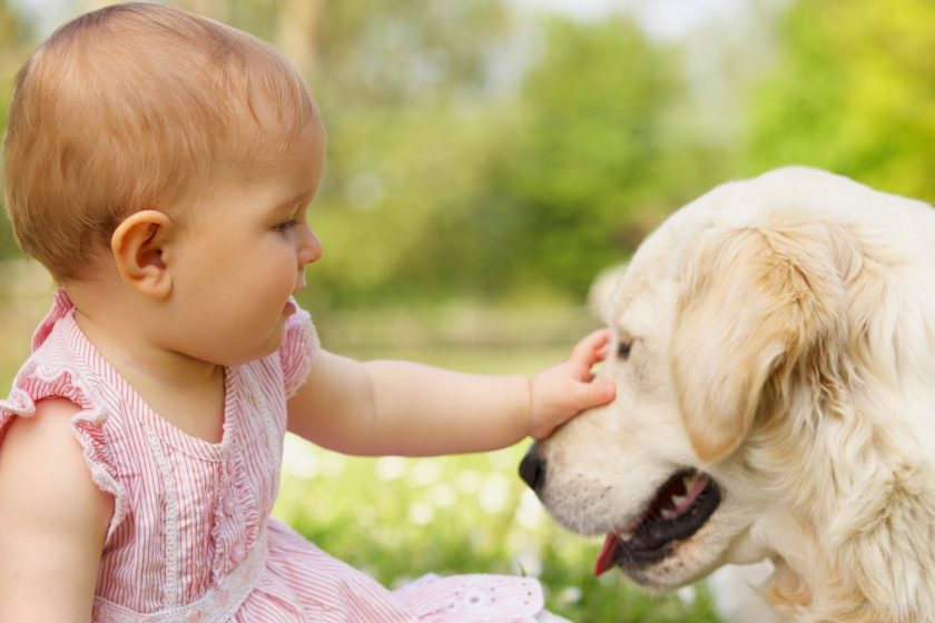 How to keep your kids safe around dogs