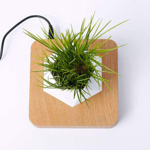 Load image into Gallery viewer, Levitating Plant Pot (Plant not included)