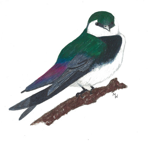 Violet Green Swallow - Mini Puzzle