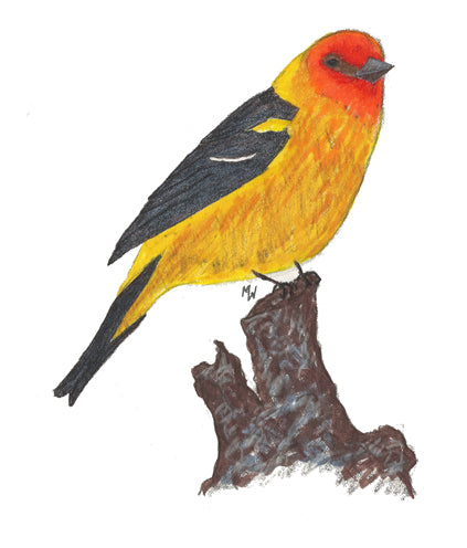 Western Tanager - Mini Puzzle