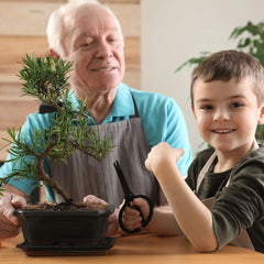 Grandfather pruning bonsai tree with grandson