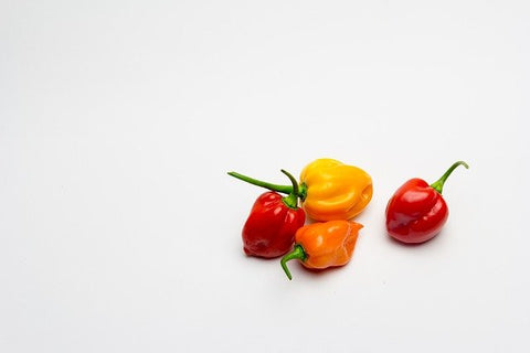 Habanero peppers Hot chili peppers seed starter kit