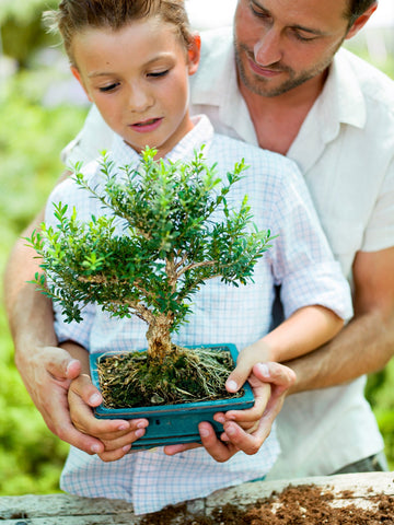 Father and son holding a bonsai tree