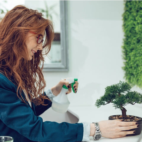 grow a bonsai tree indoor and outdoor Home and office hobby