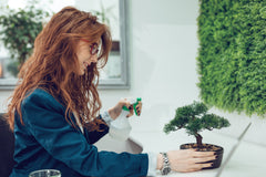 woman watering a bonsai tree in the office with a water mister