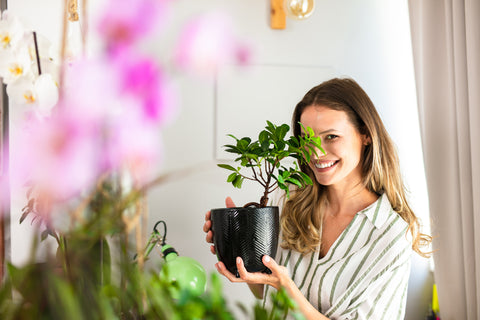 Grow your own bonsai tree from seed