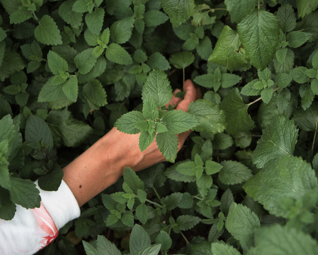 Healing herbs have interested Henna since childhood.
