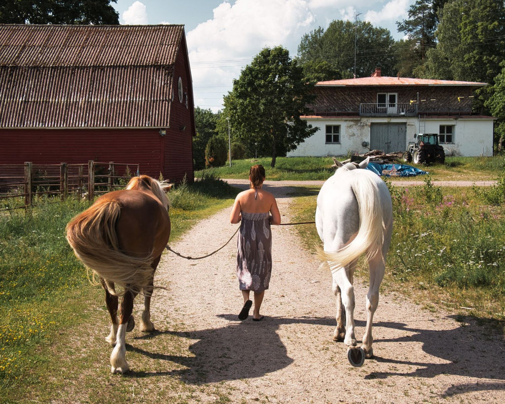 Henna has always loved horses and they have been her teachers in many things.
