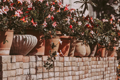 Garden plants in containers