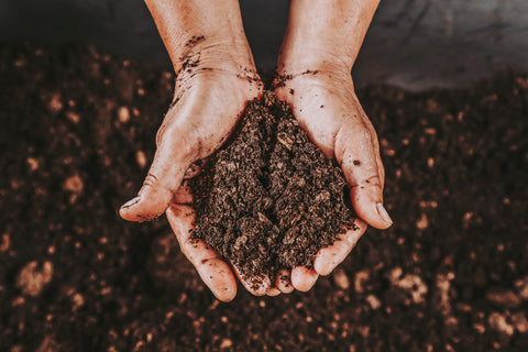 Person holding a handful of compost