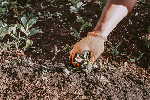 Person with gardening gloves removing weeds from garden soil