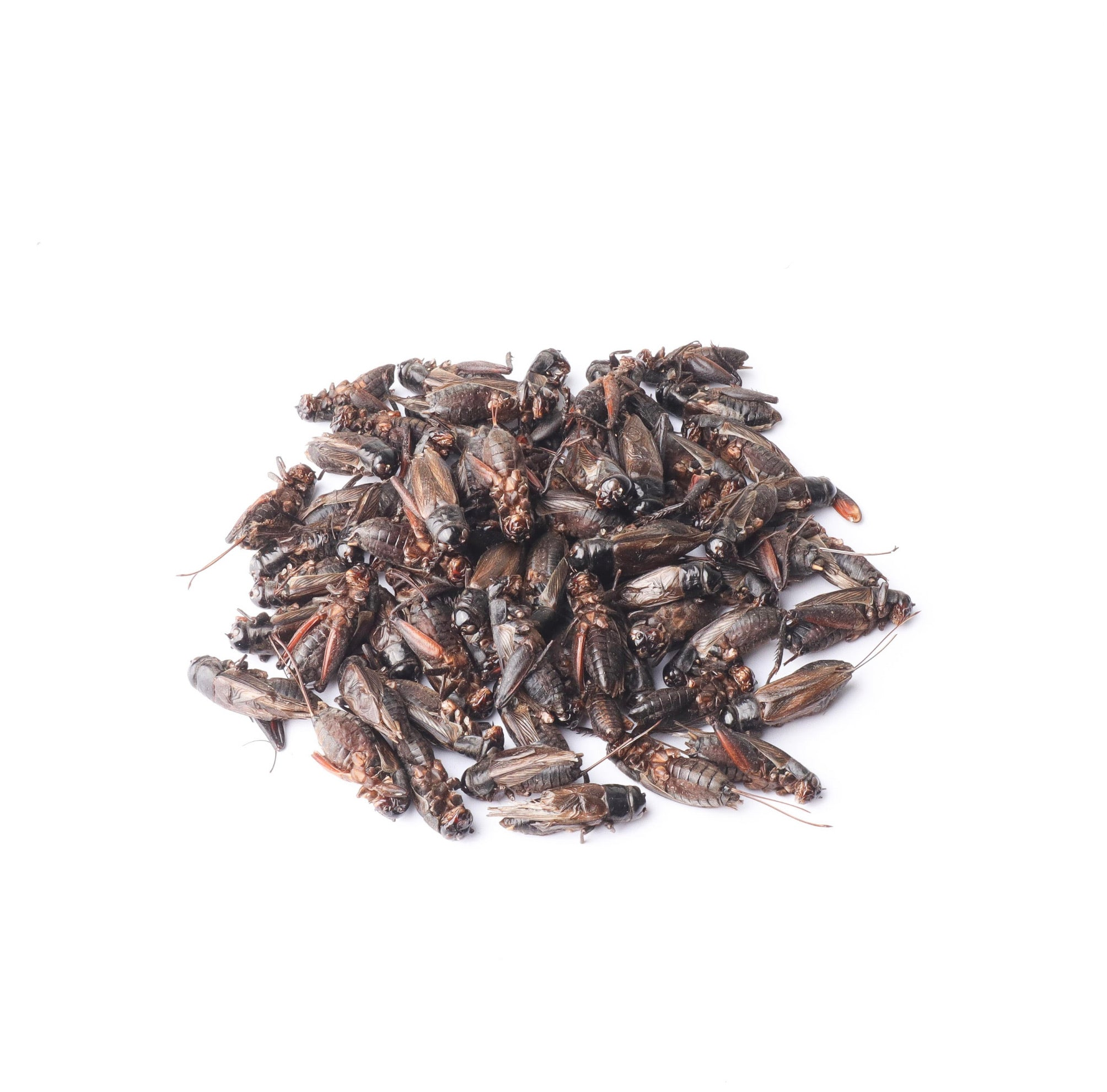 Dried Crickets