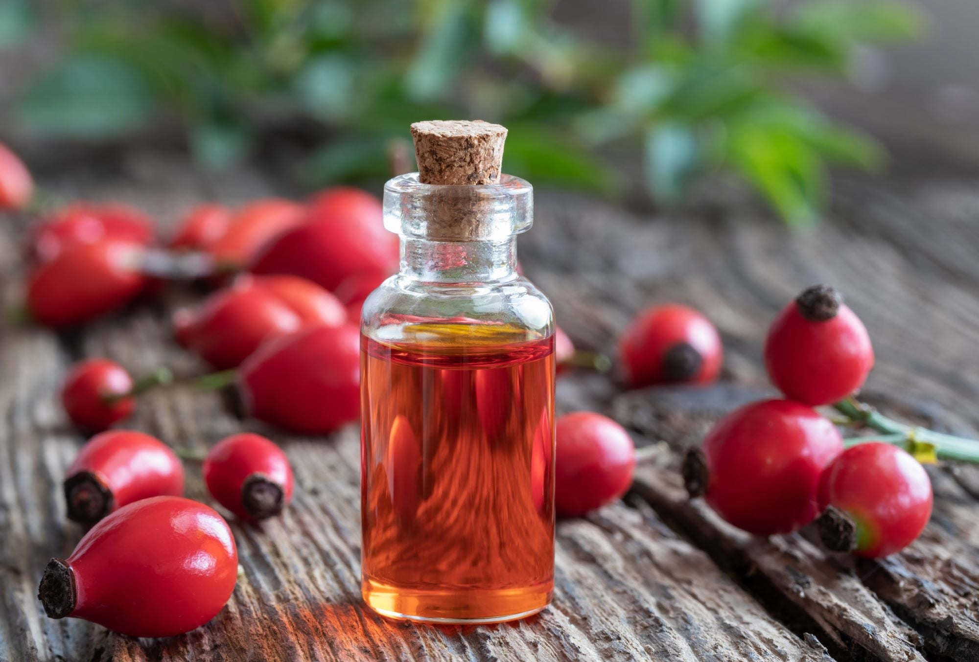 Rosehip Oil- How To Include It In Your Skin Care Routine + Benefits