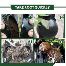 Load image into Gallery viewer, Instant Plant Root Grow Box