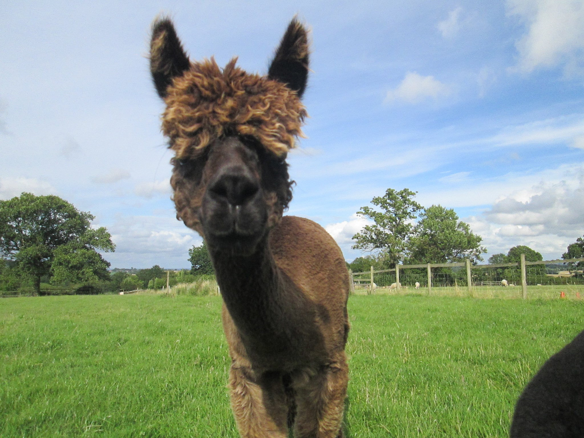 Lou's Poo. Dried Alpaca Fertiliser 400g.