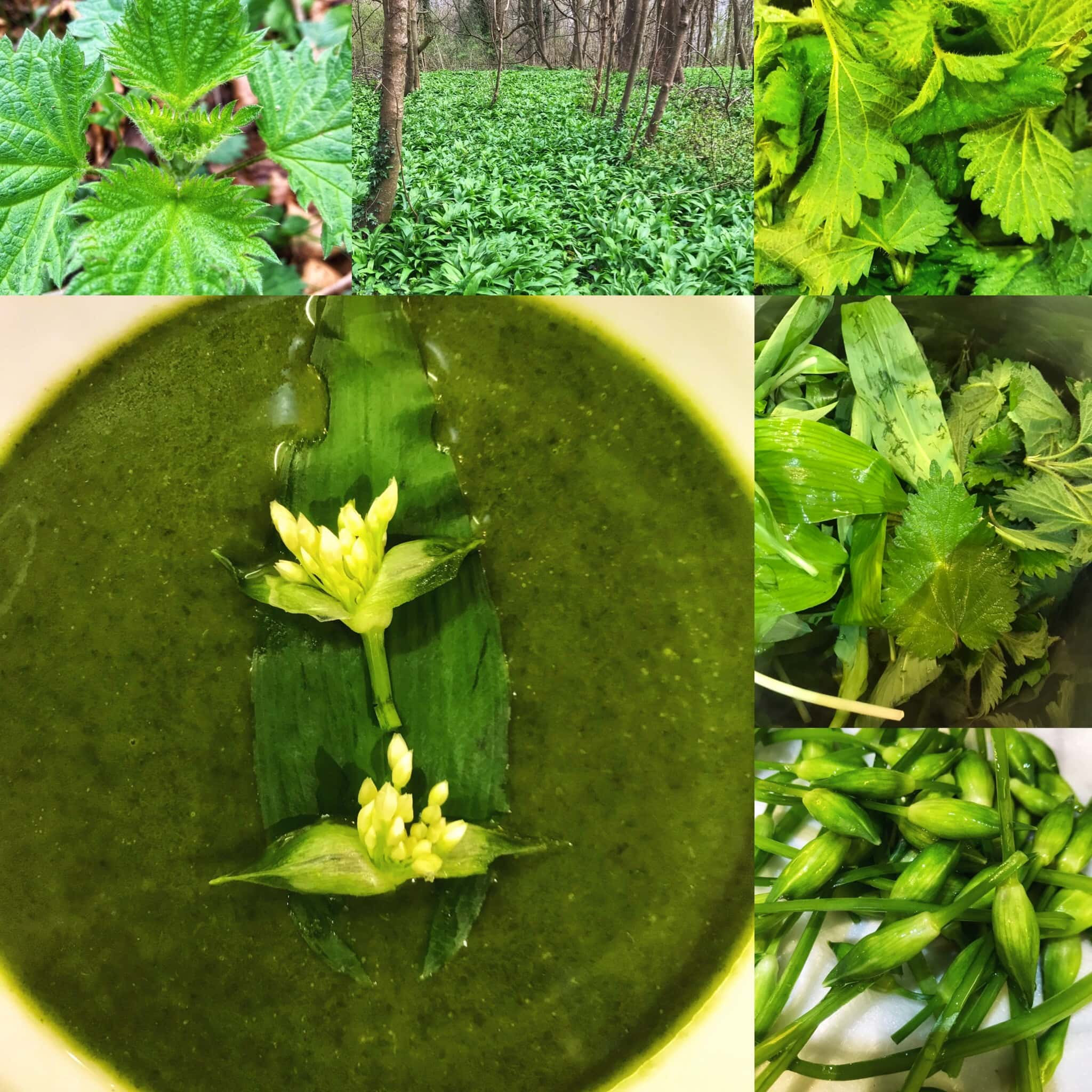wild-nettle-soup-delivery