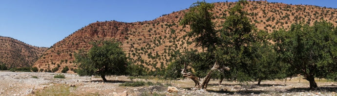 Argan: a plant treasure for our skin
