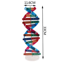 Load image into Gallery viewer, Human DNA Models Double Helix Science Toy