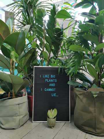I like big plants and I can't lie letterboard