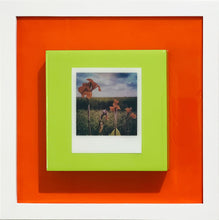 Load image into Gallery viewer, Canna Lillies