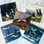Puffin Artwork Cards