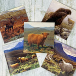 Beautiful Highland Cards