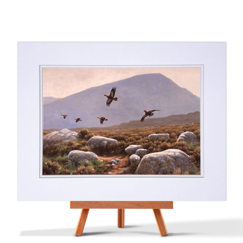 Red Grouse Fine Art Print
