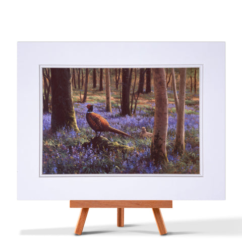 Pheasant In Bluebells Fine Art Print