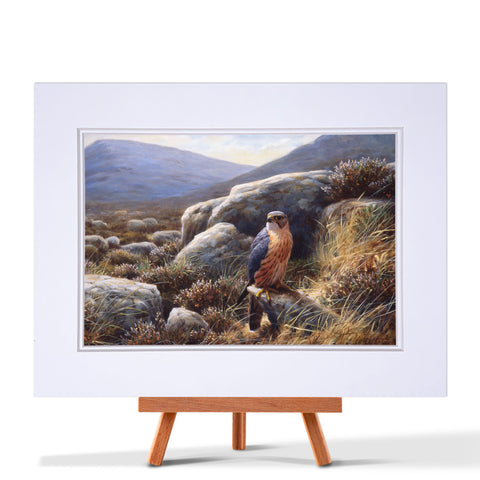 Merlin On A Rock Fine Art Print