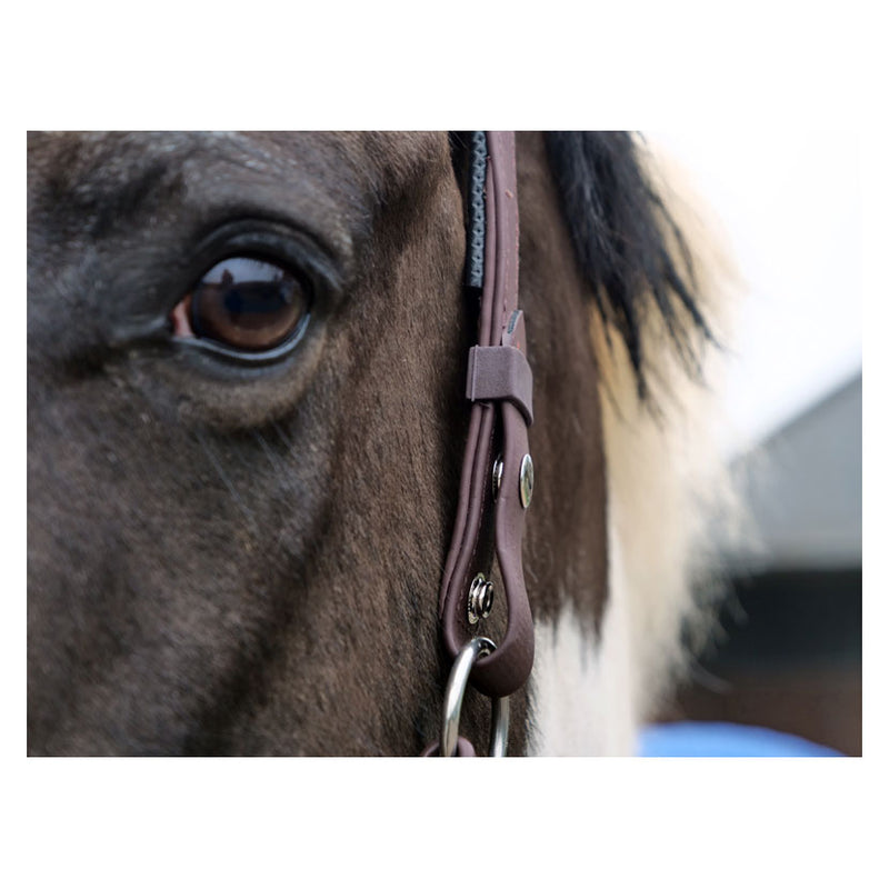 Equilibrium Stellar™ Head Collar