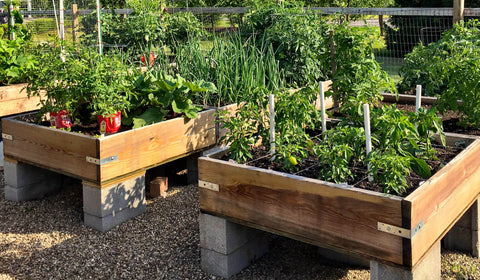 two raised beds