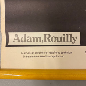 Adam Rouilly Medical Chart Vintage
