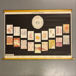 Load image into Gallery viewer, Cellular Tissue Medical Chart Vintage