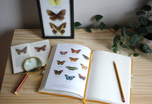 Load image into Gallery viewer, Observer's Notebook | Butterflies