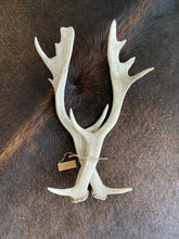 Load image into Gallery viewer, Naturally Cast Deer Antler Set