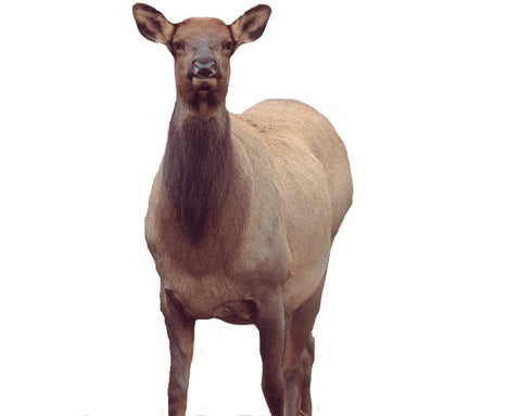 Montana Decoy™ Eichler Elk Decoy - Elk Cow Decoy