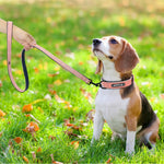 Load image into Gallery viewer, Personalized Leather Dog Collar Set