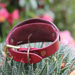 Hand tooled leather collar with the dragon for Miniature Italian Greyhound