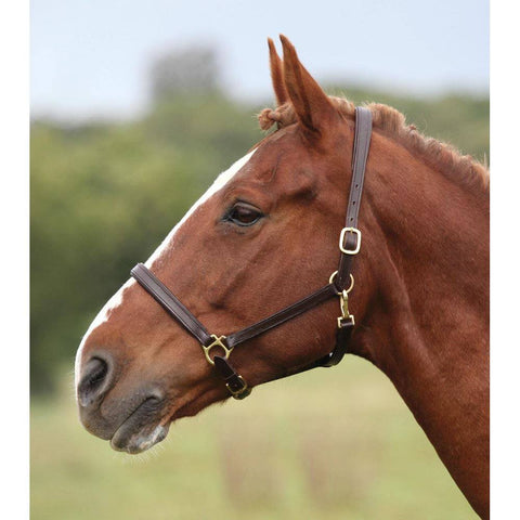 Havana Blenheim Lined Leather Headcollar