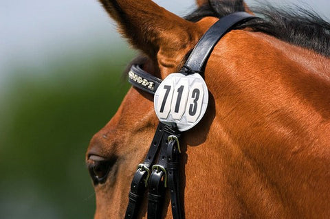 Bridle Numbers by Ekkia