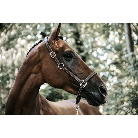 Kentucky Flexible Leather Headcollar