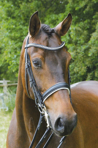 Aachen Double Bridle