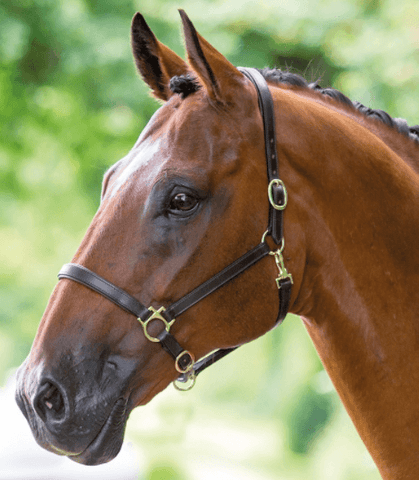 DISCBW Leather Headcollar