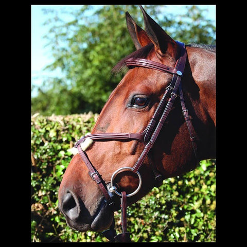 Dy'on Grackle Bridle