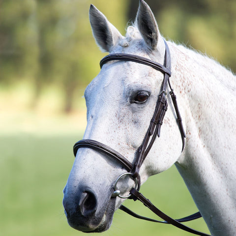Avignon Raised Cavesson Bridle